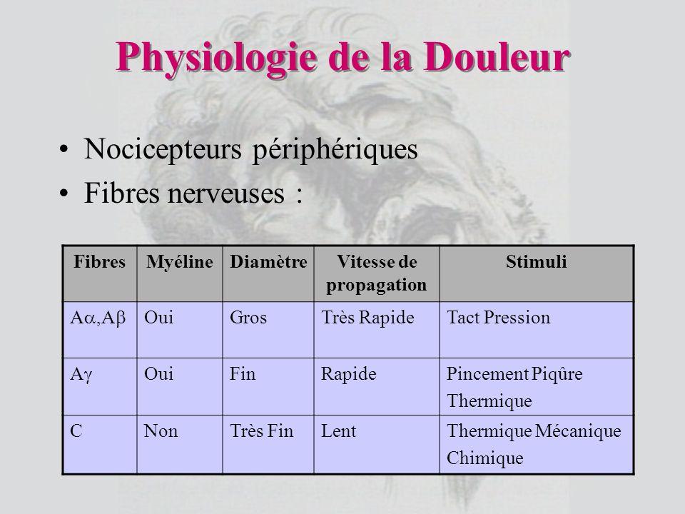 Physiologie de la Douleur Nocicepteurs périphériques Fibres nerveuses : FibresMyélineDiamètreVitesse de propagation Stimuli A,A OuiGrosTrès RapideTact