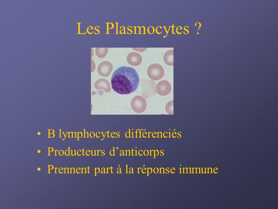 Les Plasmocytes ? B lymphocytes différenciés Producteurs danticorps Prennent part à la réponse immune