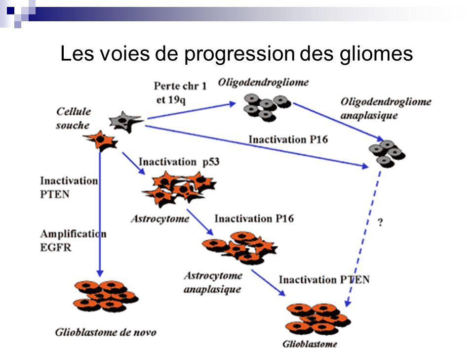 Les voies de progression des gliomes