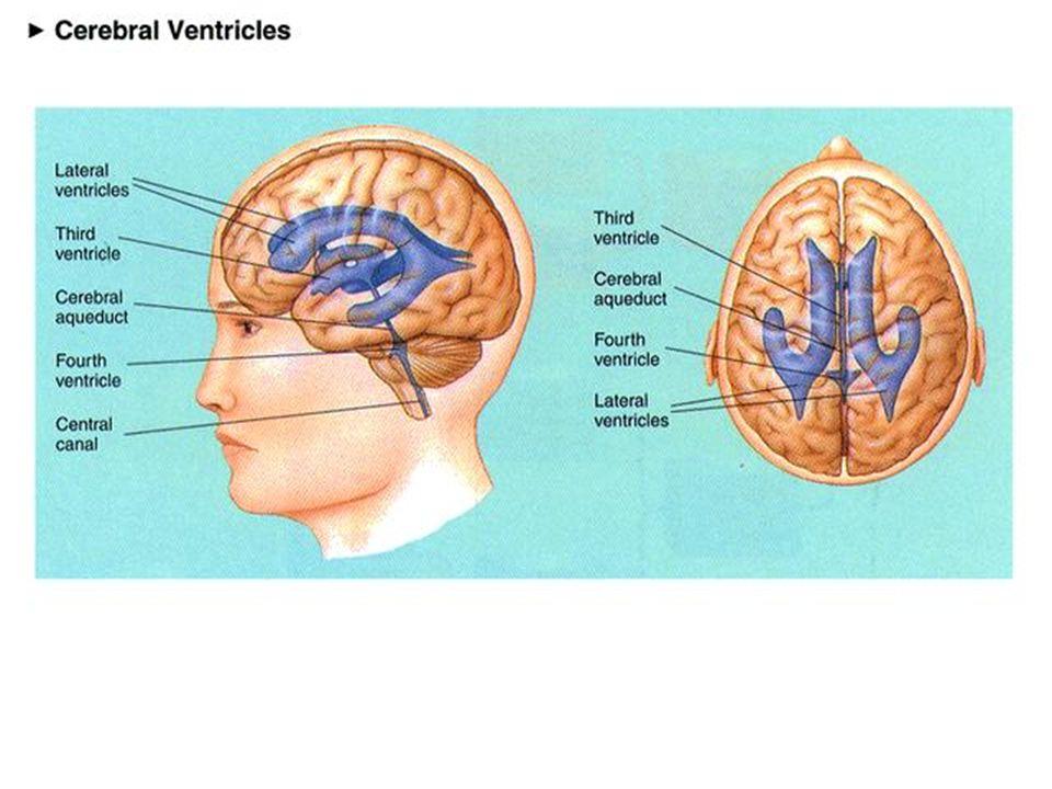 TRAITEMENT Tableau chronique : Mise en place dun shunt ventriculo péritonéal Autres types de shunt Ventriculocisternostomie (hydrocéphalies obstructives uniquement)