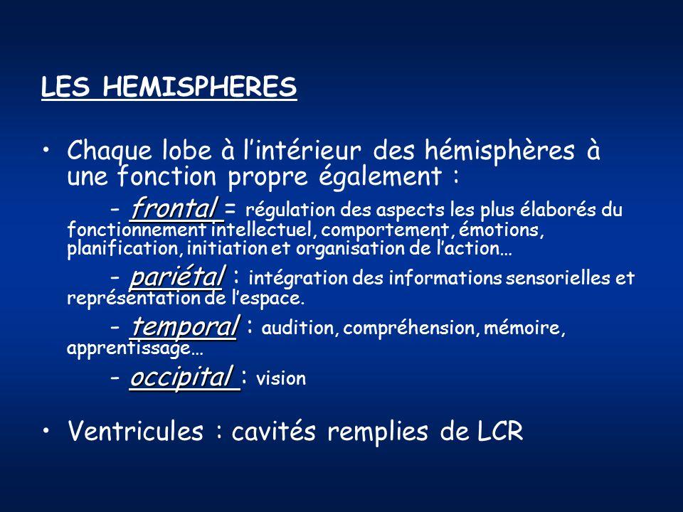 LES HEMISPHERES Chaque lobe à lintérieur des hémisphères à une fonction propre également : frontal - frontal = régulation des aspects les plus élaboré
