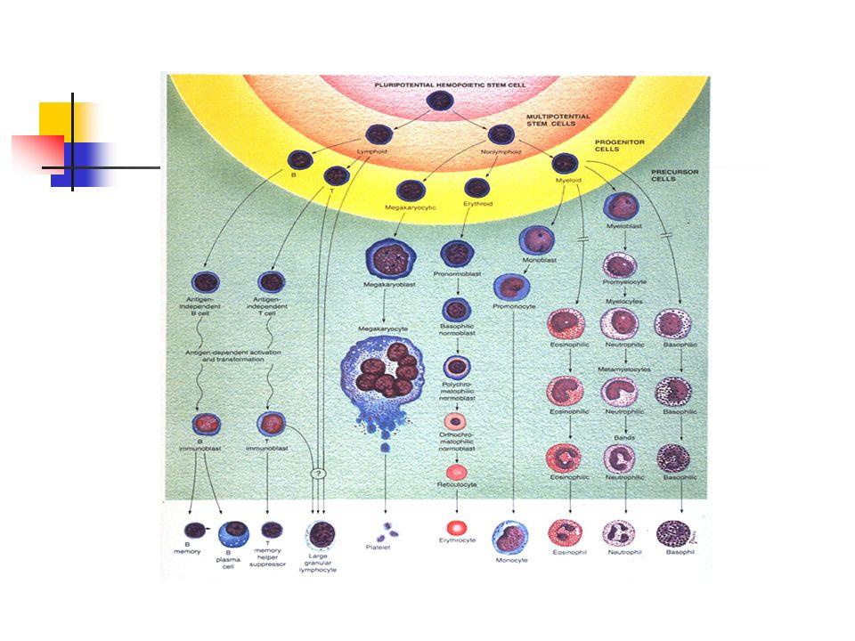 Traitement Traitement de support : 1.Dispositif veineux implantable: Facilite ladministration des produits sanguins De la chimiothérapie et des antibiotiques Et des prises de sang fréquentes