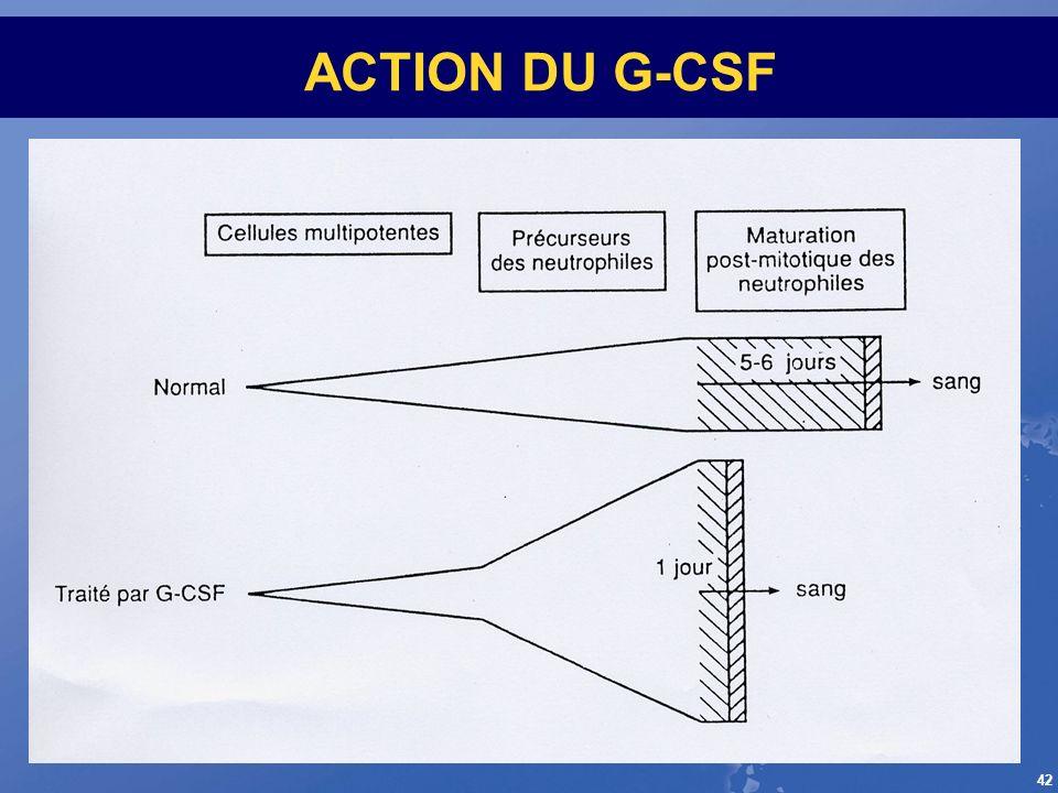 42 ACTION DU G-CSF