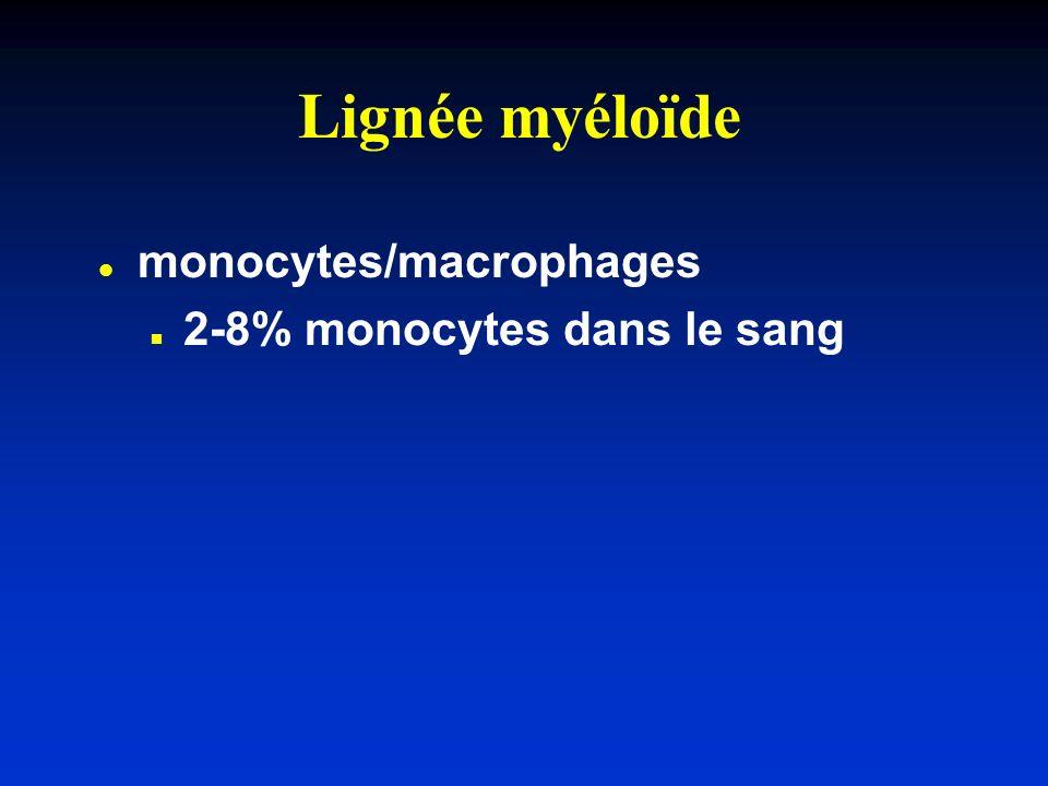 Lignée myéloïde l l monocytes/macrophages n n 2-8% monocytes dans le sang