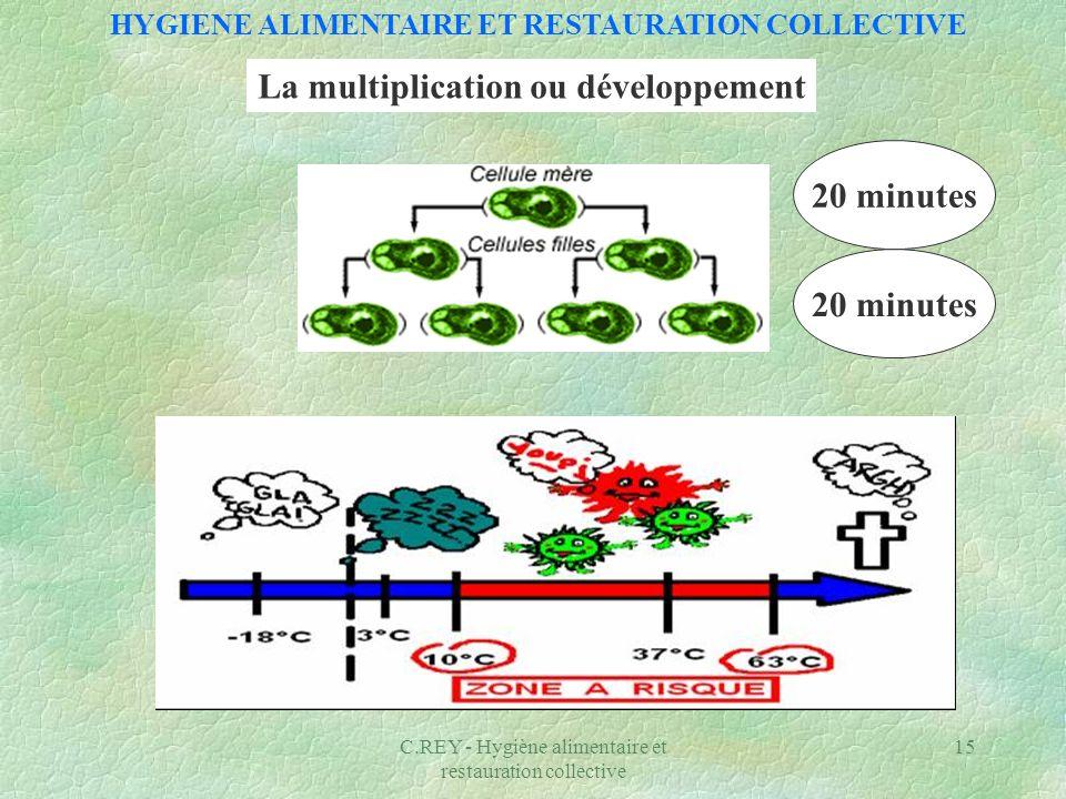 C.REY - Hygiène alimentaire et restauration collective 15 HYGIENE ALIMENTAIRE ET RESTAURATION COLLECTIVE La multiplication ou développement 20 minutes