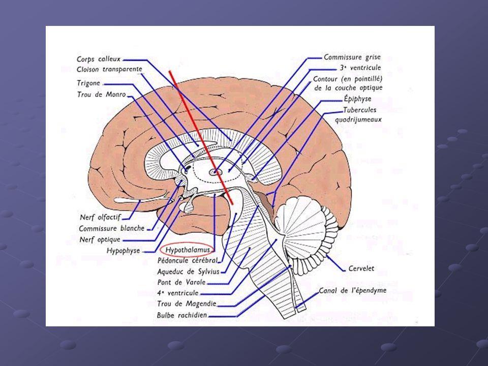 Bilan standard de débrouillage à ladmission du patient (disponible sous 24 heures): Numération formule sanguine plaquettesVS Protéine C réactive électrophorèse des protéines transaminases phosphatases alcalines ionogramme plasmatique bandelette urinaire Radiographie du thorax (face + profil)