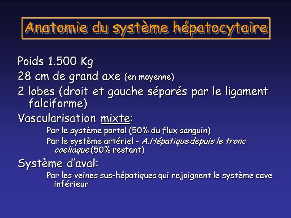 Anatomie du système hépatocytaire Poids 1.500 Kg 28 cm de grand axe (en moyenne) 2 lobes (droit et gauche séparés par le ligament falciforme) Vascular