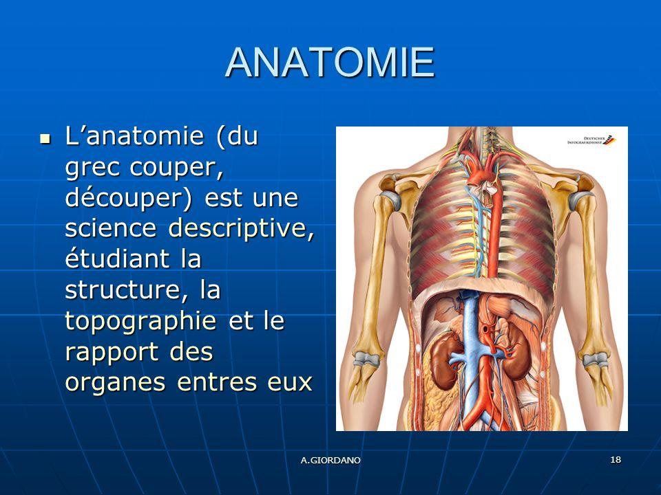 A.GIORDANO 18 ANATOMIE Lanatomie (du grec couper, découper) est une science descriptive, étudiant la structure, la topographie et le rapport des organes entres eux