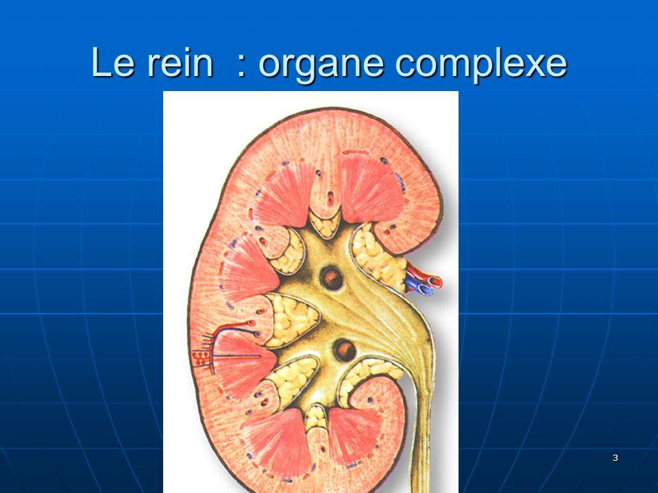 A.GIORDANO 3 Le rein : organe complexe