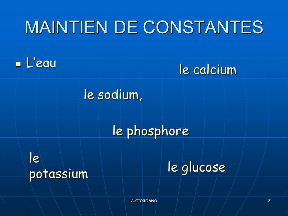 A.GIORDANO 5 MAINTIEN DE CONSTANTES Leau Leau le phosphore le phosphore le sodium, le potassium le glucose le calcium