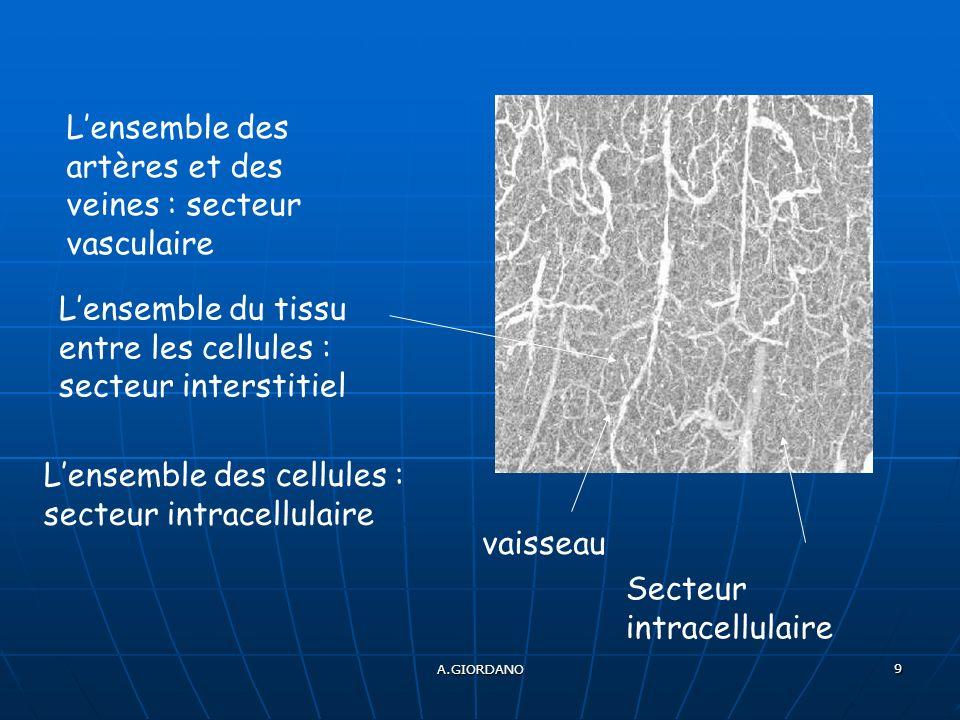 A.GIORDANO 9 vaisseau Lensemble des artères et des veines : secteur vasculaire Lensemble du tissu entre les cellules : secteur interstitiel Lensemble des cellules : secteur intracellulaire Secteur intracellulaire
