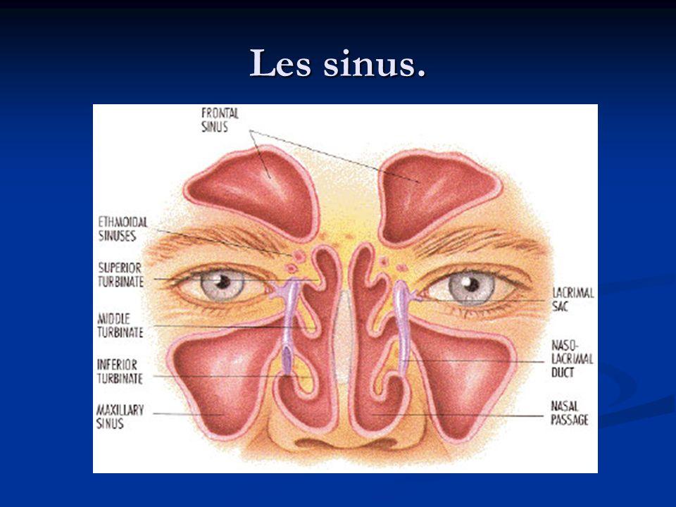 Les os de la face sont creusés de cavités : les sinus.