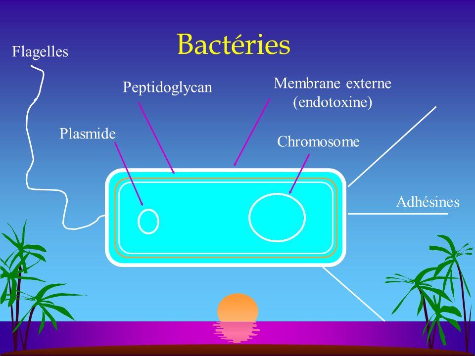 Bactéries chromosome plasmide flagelles peptidoglycan membrane