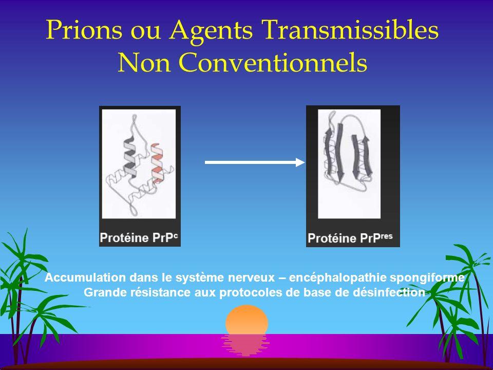 Prions ou Agents Transmissibles Non Conventionnels Accumulation dans le système nerveux – encéphalopathie spongiforme Grande résistance aux protocoles