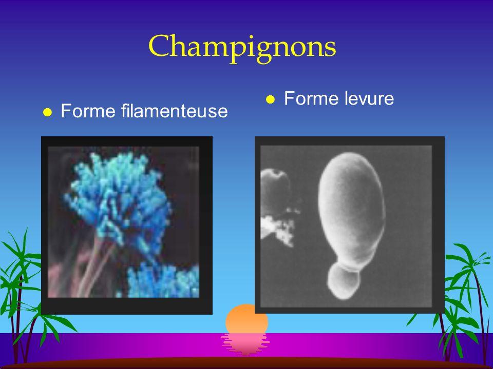Prokaryotes et Eucaryotes ont une organisation cellulaire différentes