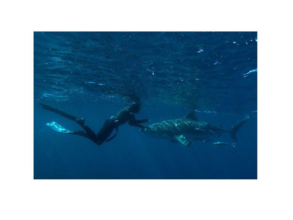 OBJECTIFS Découverte du monde subaquatique et sensibilisation à sa protection, Prévention des incidents et accidents par lapprentissage et les connaissances liées à lévolution subaquatique.