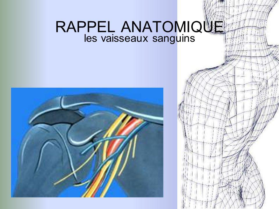 RAPPEL ANATOMIQUE les vaisseaux sanguins