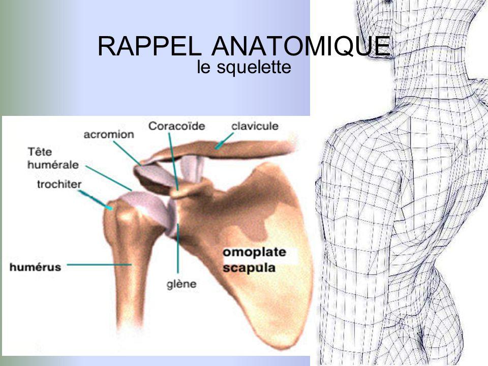 RAPPEL ANATOMIQUE cliché radiologique