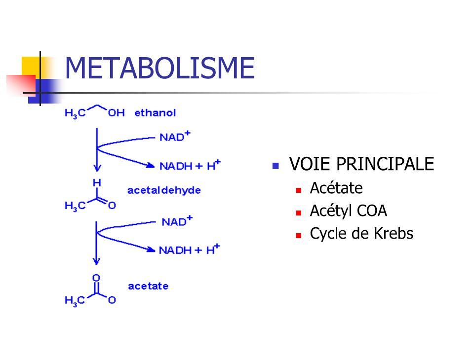 METABOLISME VOIE PRINCIPALE Acétate Acétyl COA Cycle de Krebs