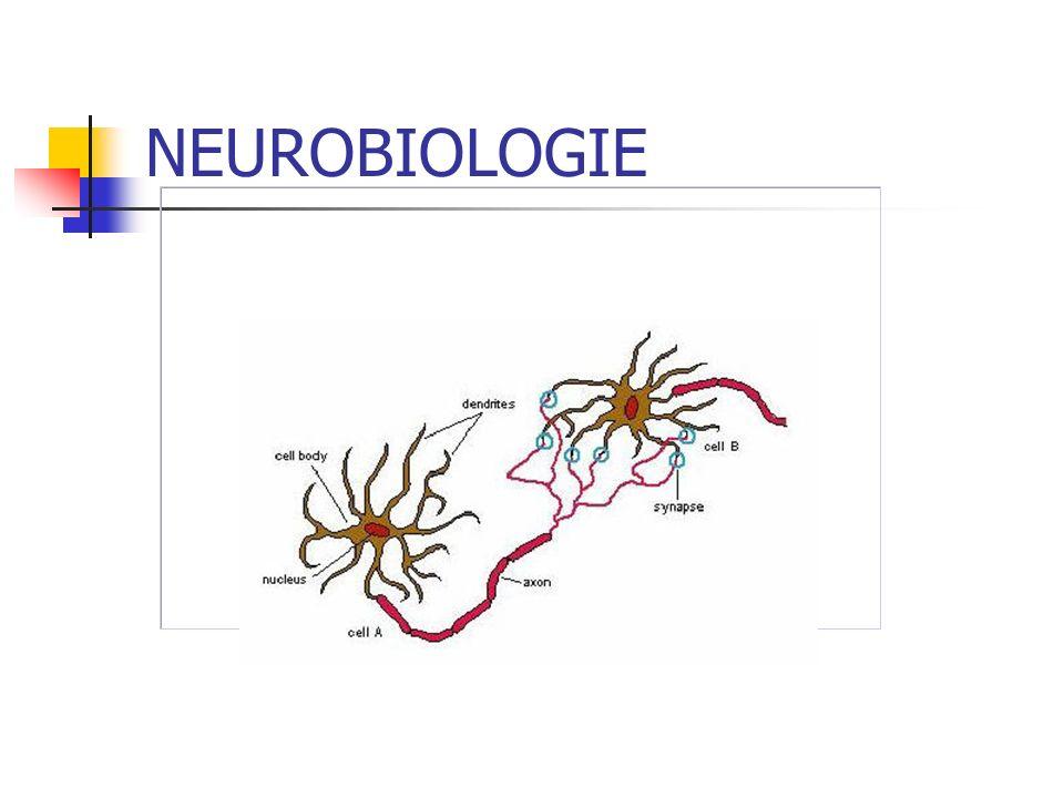 NEUROBIOLOGIE La synapse: Permet la transformation dun signal électrique (influx nerveux) en message chimique (neurotransmetteurs)