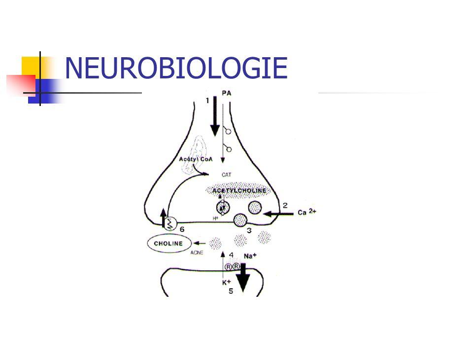 Prioritaire Inhibition de la néoglucogenèse Inhibition de la lipolyse (accumulation des graisses) Accumulation dacide lactique
