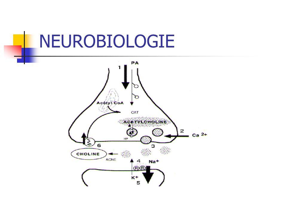 NEUROBIOLOGIE Dopamine Dysphorie Opioïdes Douleur, dysphorie GABA Anxiété, attaque de panique Noradrenaline Agitation, sueurs, tachycardie, tremblements Glutamate Mort neuronale Serotonine Douleur, dysphorie, dépression