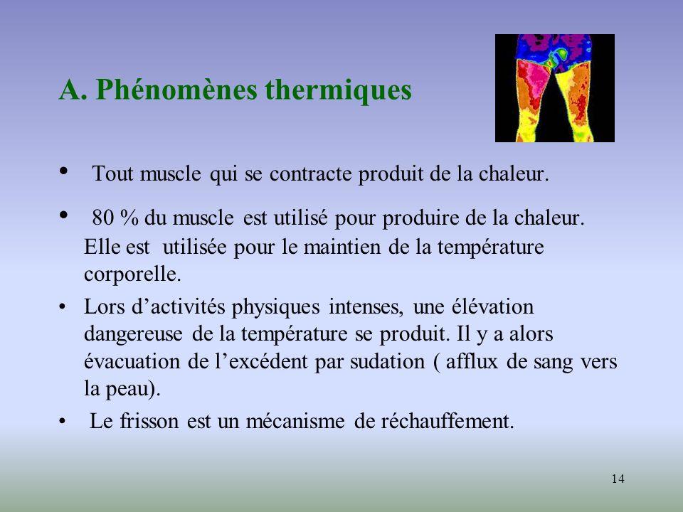 14 A. Phénomènes thermiques Tout muscle qui se contracte produit de la chaleur. 80 % du muscle est utilisé pour produire de la chaleur. Elle est utili
