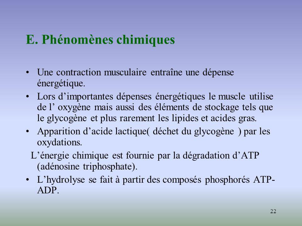 22 E. Phénomènes chimiques Une contraction musculaire entraîne une dépense énergétique. Lors dimportantes dépenses énergétiques le muscle utilise de l