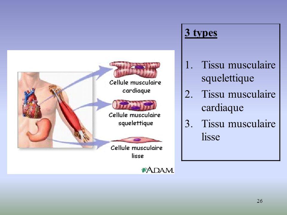 26 3 types 1.Tissu musculaire squelettique 2.Tissu musculaire cardiaque 3.Tissu musculaire lisse