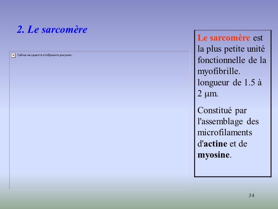 34 2. Le sarcomère Le sarcomère est la plus petite unité fonctionnelle de la myofibrille. longueur de 1.5 à 2 m. Constitué par l'assemblage des microf