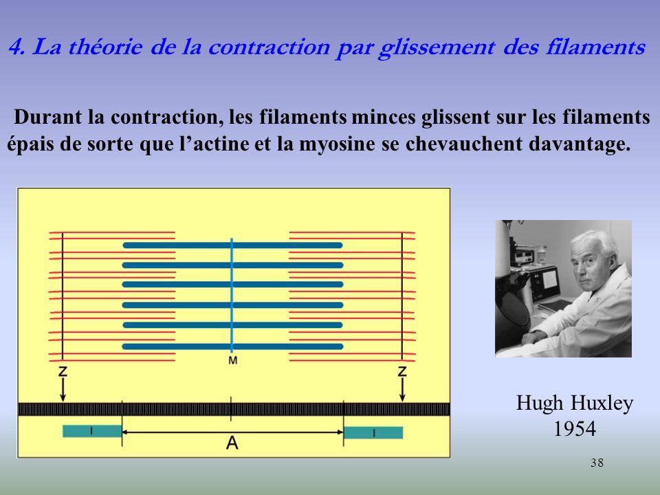 38 4. La théorie de la contraction par glissement des filaments Durant la contraction, les filaments minces glissent sur les filaments épais de sorte