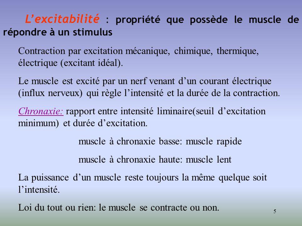 5 Lexcitabilité : propriété que possède le muscle de répondre à un stimulus Contraction par excitation mécanique, chimique, thermique, électrique (exc