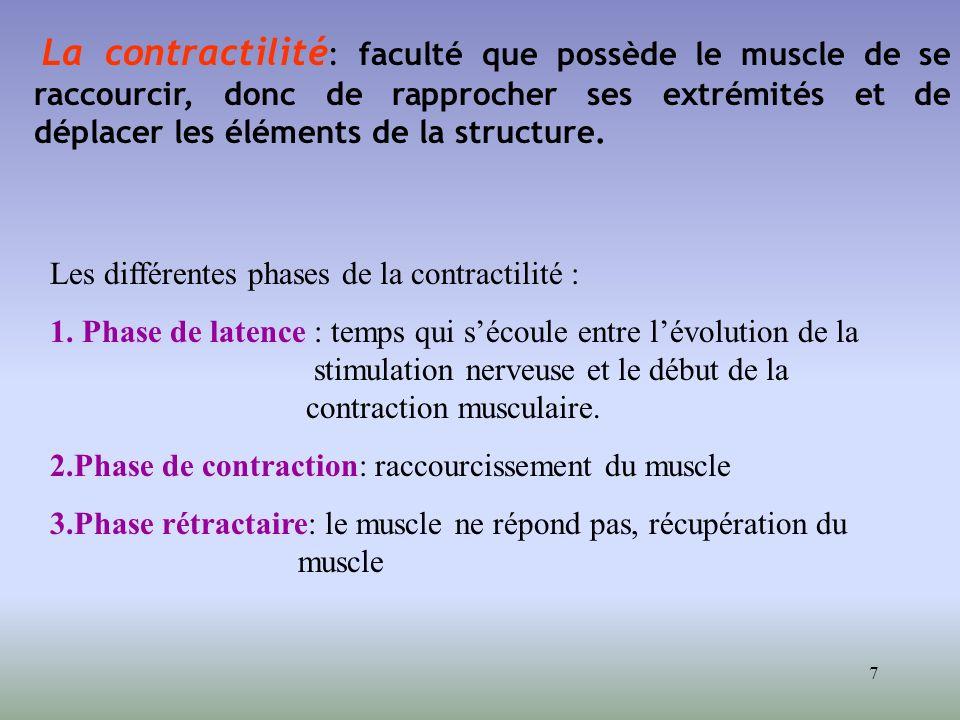 7 La contractilité : faculté que possède le muscle de se raccourcir, donc de rapprocher ses extrémités et de déplacer les éléments de la structure. Le