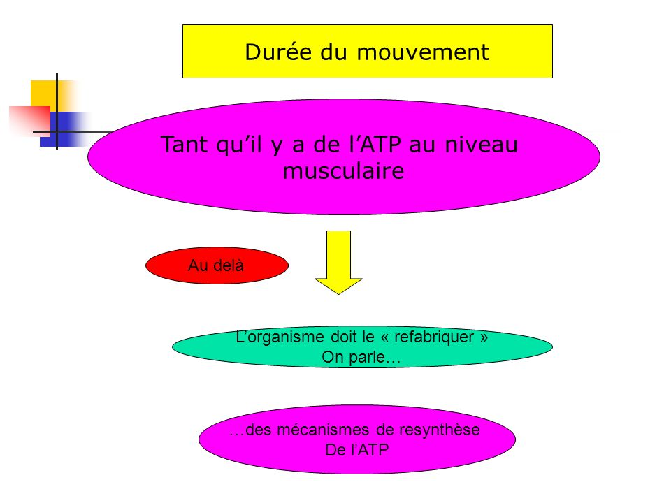 Tant quil y a de lATP au niveau musculaire Durée du mouvement Au delà Lorganisme doit le « refabriquer » On parle… …des mécanismes de resynthèse De lA