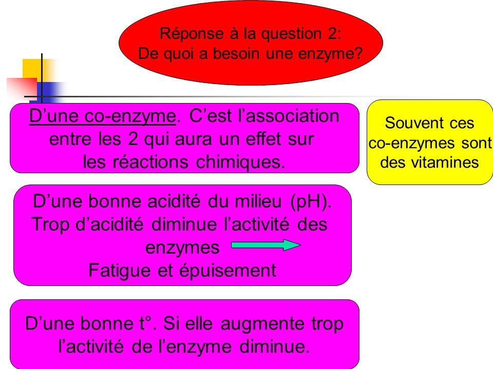 Réponse à la question 2: De quoi a besoin une enzyme? Dune co-enzyme. Cest lassociation entre les 2 qui aura un effet sur les réactions chimiques. Dun