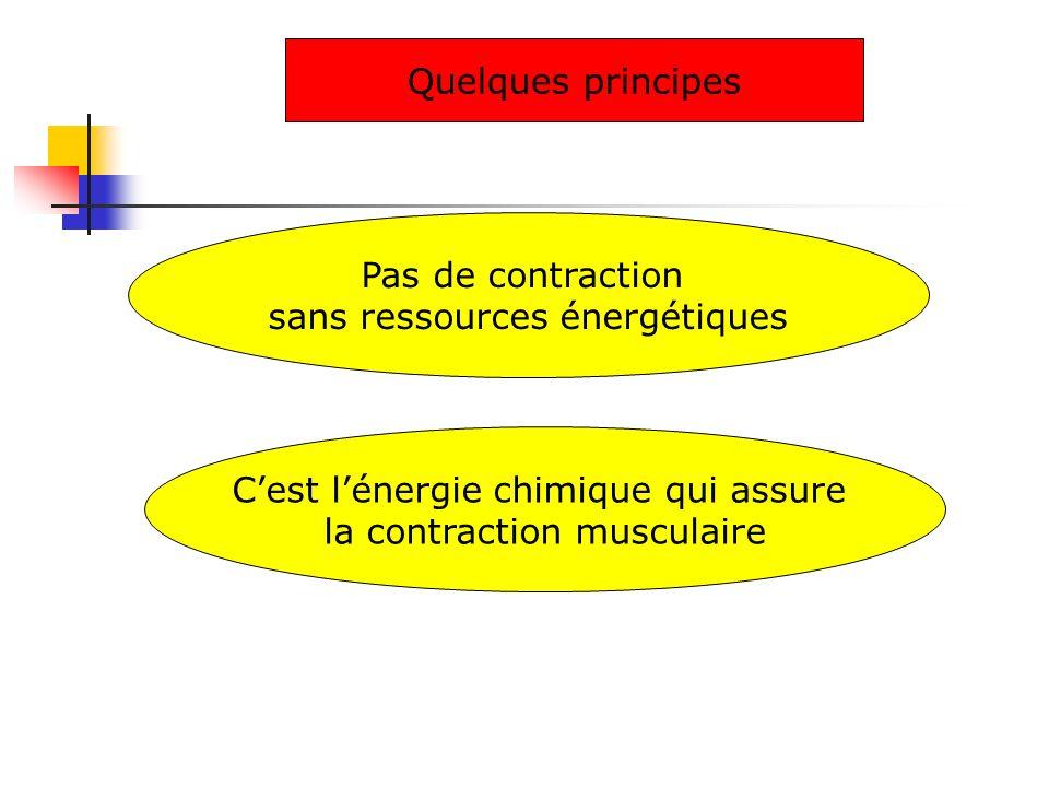 Pas de contraction sans ressources énergétiques Quelques principes Cest lénergie chimique qui assure la contraction musculaire