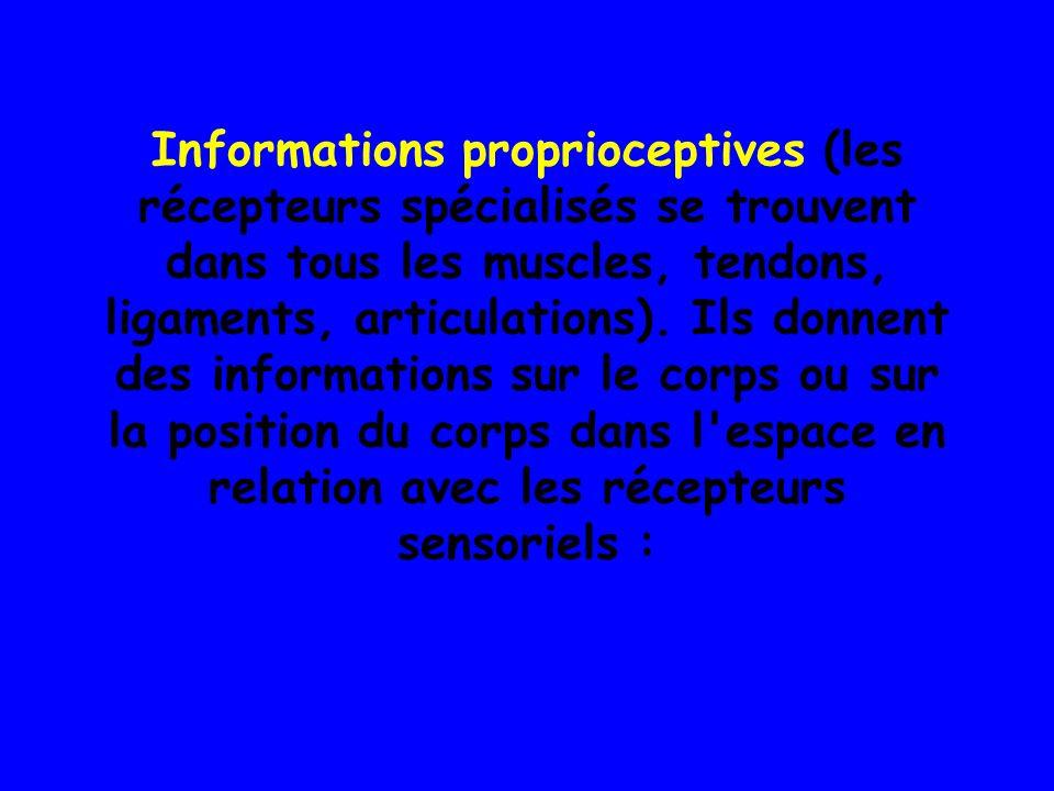 Les informations kinesthésiques.