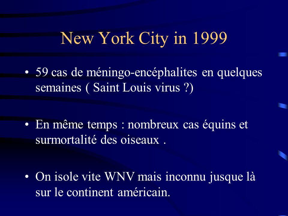 New York City in 1999 59 cas de méningo-encéphalites en quelques semaines ( Saint Louis virus ?) En même temps : nombreux cas équins et surmortalité des oiseaux.