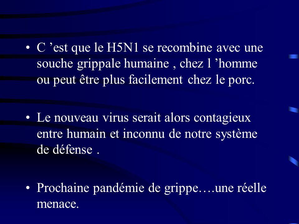 C est que le H5N1 se recombine avec une souche grippale humaine, chez l homme ou peut être plus facilement chez le porc.