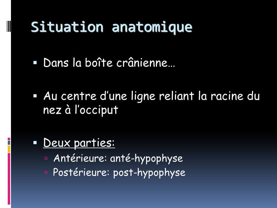 Le système hypothalamo-hypophysaire