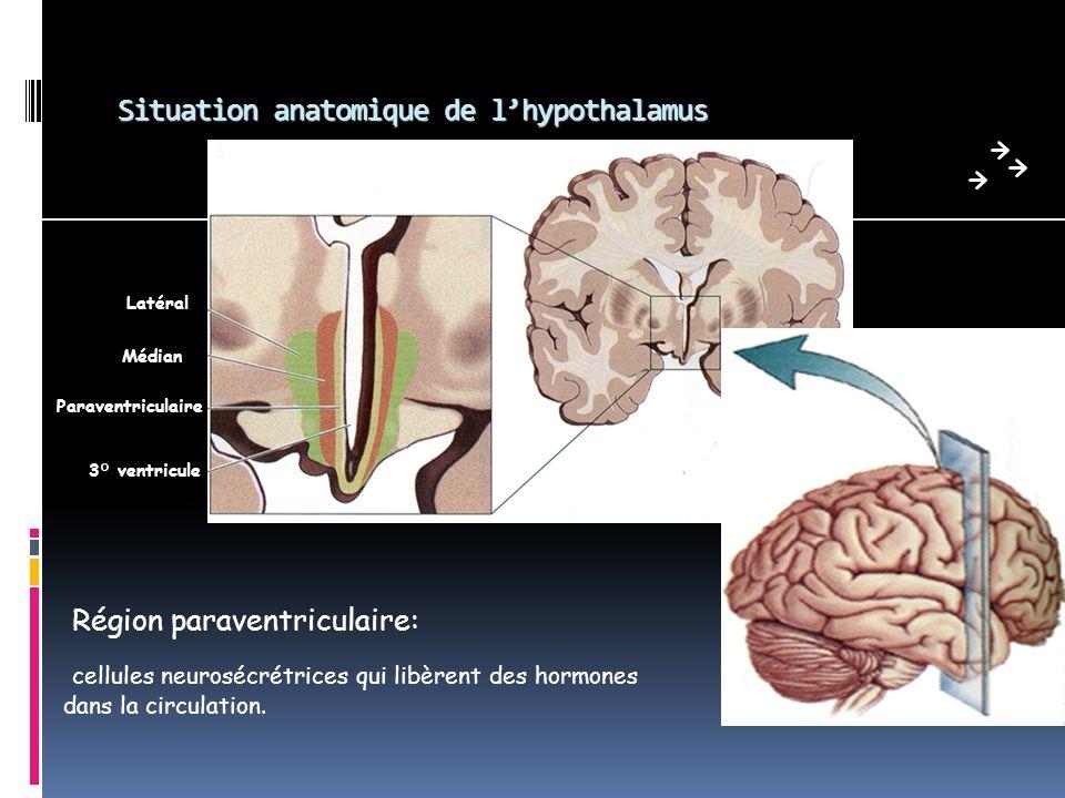 Actions de la GH Croissance osseuse++ Tissu osseux = tissu vivant, constitué par une matrice organique produite par les ostéoblastes La GH stimule la: production et activité des ostéoblastes (ostéogénèse) formation cartilagineuse (chondrogénèse) croissance épiphysaire de los, jusquà la soudure des cartilages de conjugaison