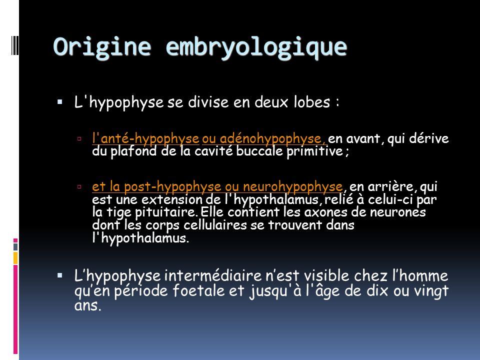 Origine embryologique de lhypophyse