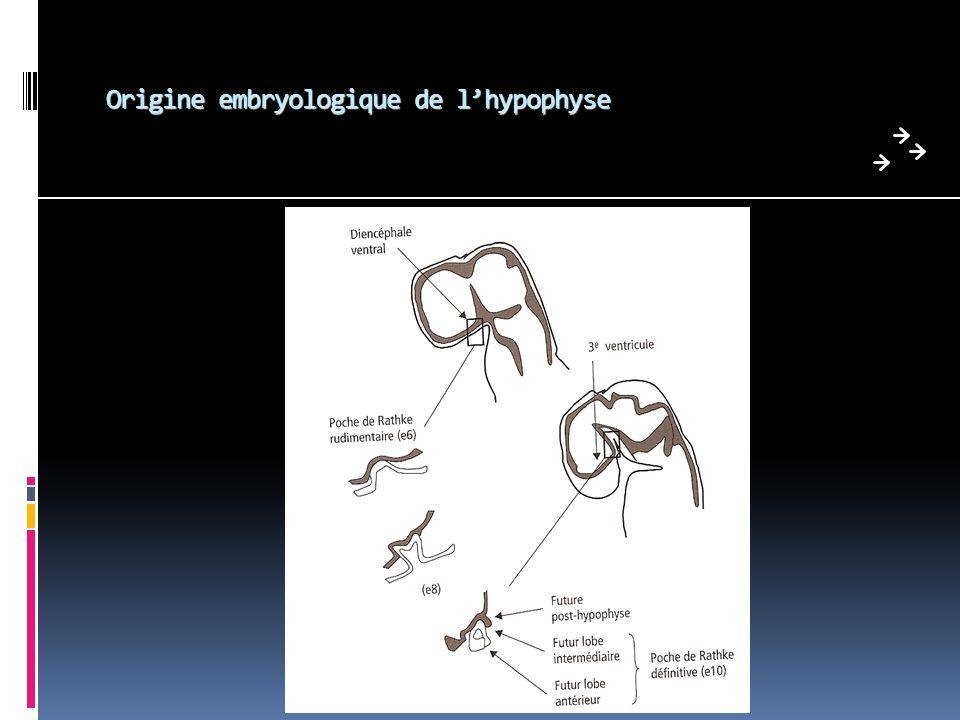 Laxe thyréotrope Excès = adénome thyréotrope: 1 ère observation en 1960 rares: 1 à 2 % des adénomes hypophysaires; 80 à 90 % macroadénomes (donc > 10 mm) signes dhyperthyroïdie aspécifiques goitre présent dans 9 cas sur 10 Biologie: TSH N ou haute, T4 élevée