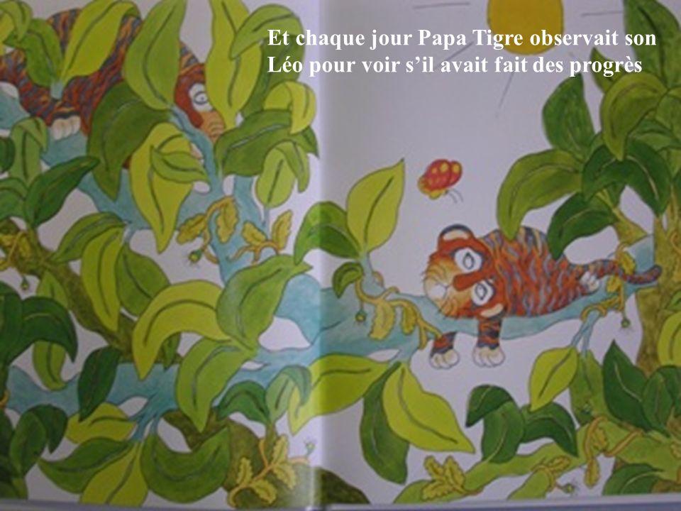 Et chaque jour Papa Tigre observait son Léo pour voir sil avait fait des progrès