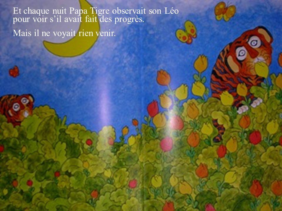 Et chaque nuit Papa Tigre observait son Léo pour voir sil avait fait des progrès. Mais il ne voyait rien venir.