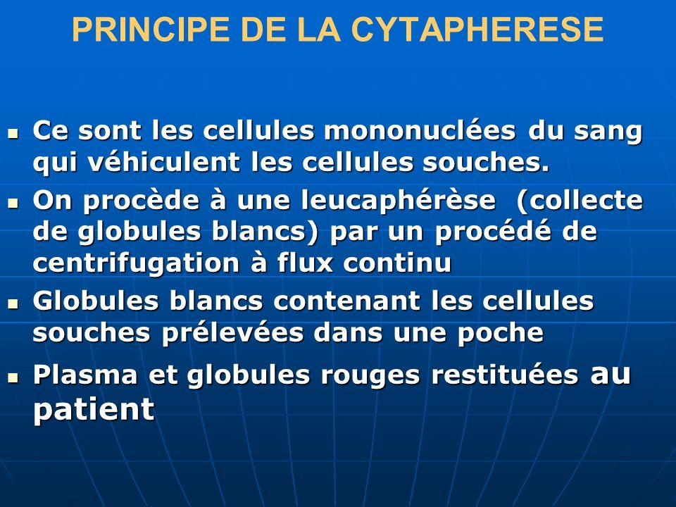PRINCIPE DE LA CYTAPHERESE Ce sont les cellules mononuclées du sang qui véhiculent les cellules souches. Ce sont les cellules mononuclées du sang qui