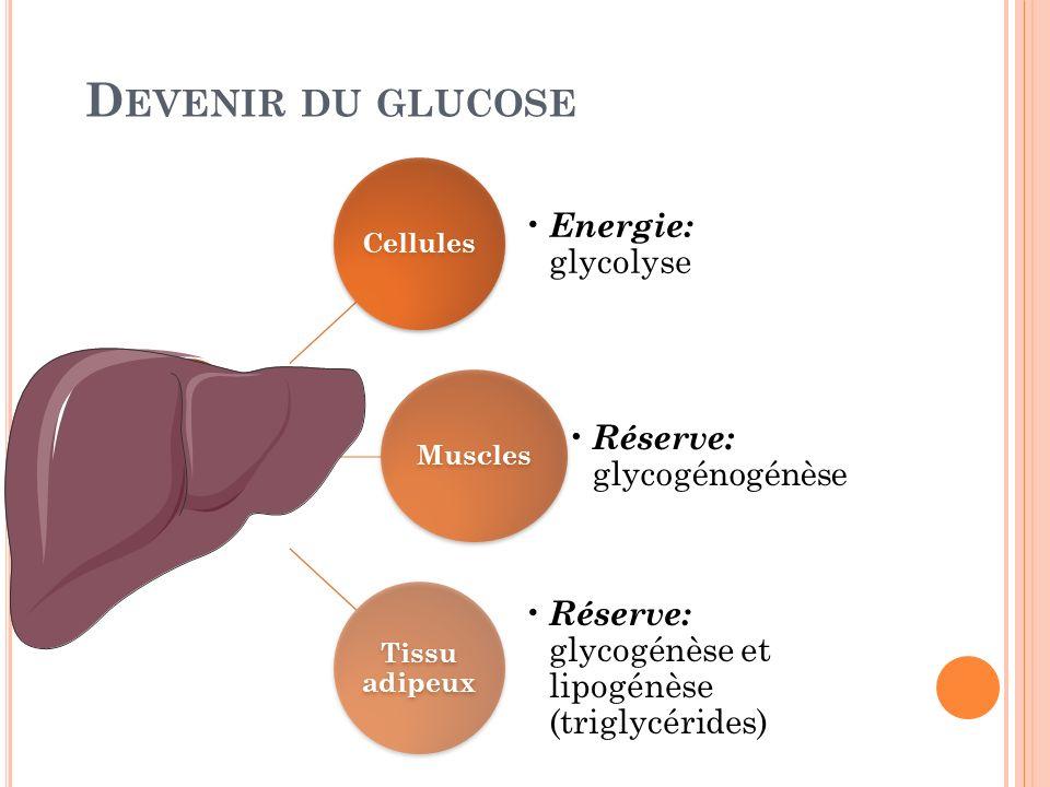 D EVENIR DU GLUCOSE Cellules Energie: glycolyse Muscles Réserve: glycogénogénèse Tissu adipeux Réserve: glycogénèse et lipogénèse (triglycérides)