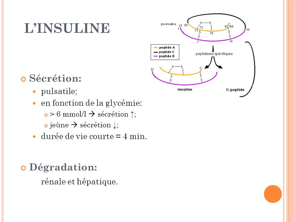Sécrétion: pulsatile; en fonction de la glycémie: > 6 mmol/l sécrétion ; jeûne sécrétion ; durée de vie courte = 4 min. Dégradation: rénale et hépatiq