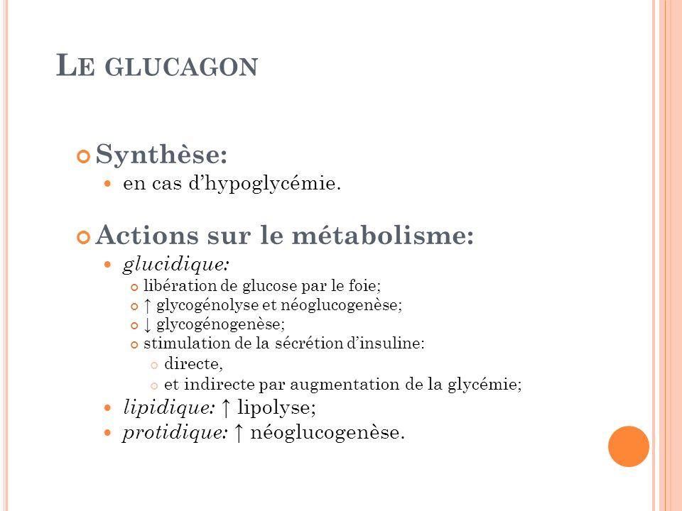 L E GLUCAGON Synthèse: en cas dhypoglycémie. Actions sur le métabolisme: glucidique: libération de glucose par le foie; glycogénolyse et néoglucogenès