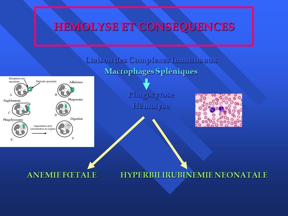 HEMOLYSE ET CONSEQUENCES Liaison des Complexes Immuns aux Macrophages Spléniques PhagocytoseHémolyse ANEMIE FŒTALE HYPERBILIRUBINEMIE NEONATALE